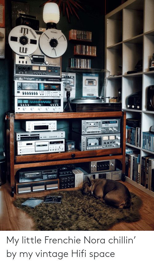 nora: My little Frenchie Nora chillin' by my vintage Hifi space