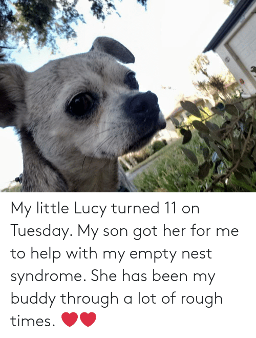 Been: My little Lucy turned 11 on Tuesday. My son got her for me to help with my empty nest syndrome. She has been my buddy through a lot of rough times. ❤❤