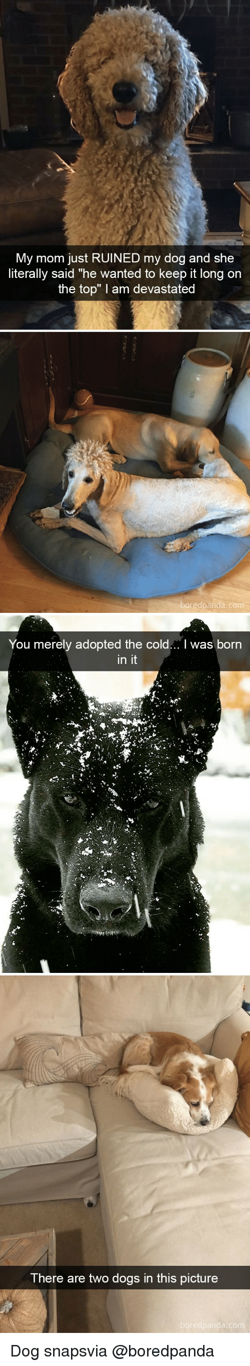 """merely: My mom just RUINED my dog and she  literally said """"he wanted to keep it long on  the top"""" I am devastated  edpanda.co   You merely adopted the cold... I was born  in it   There are two dogs in this picture Dog snapsvia @boredpanda"""