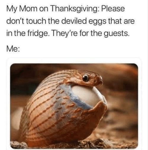 fridge: My Mom on Thanksgiving: Please  don't touch the deviled eggs that are  in the fridge. They're for the guests  Me: