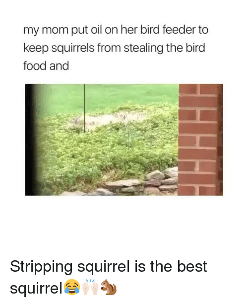 Food, Funny, and Best: my mom put oil on her bird feeder to  keep squirrels from stealing the bird  food and Stripping squirrel is the best squirrel😂🙌🏻🐿