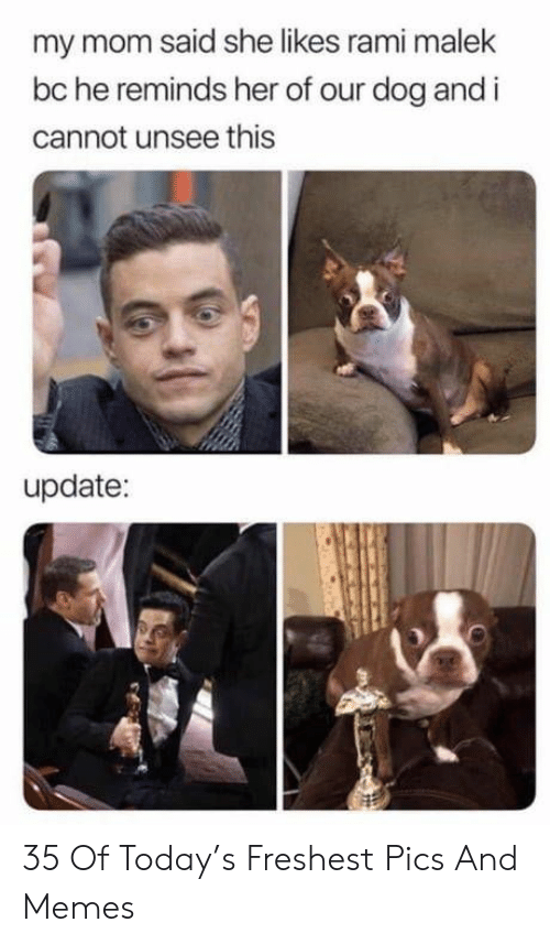 Memes, Today, and Mom: my mom said she likes rami malek  bc he reminds her of our dog and i  cannot unsee this  update: 35 Of Today's Freshest Pics And Memes