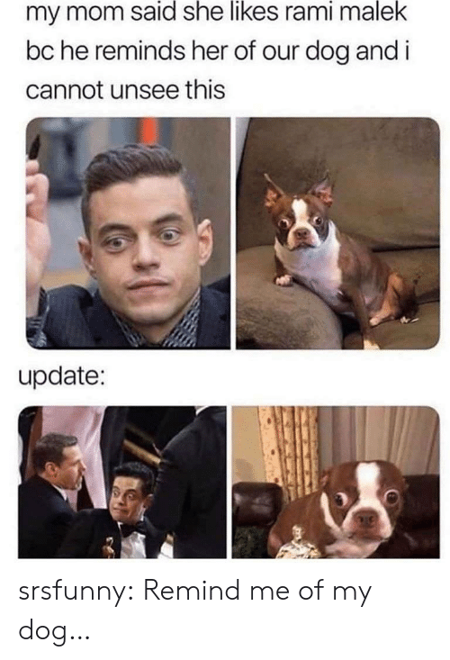 remind me: my mom said she likes rami malek  bc he reminds her of our dog and i  cannot unsee this  update: srsfunny:  Remind me of my dog…