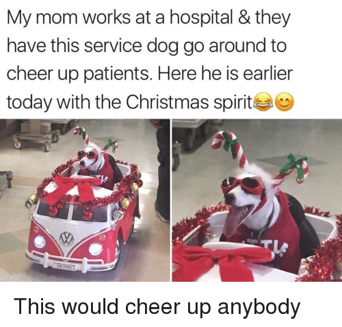 Christmas, Hospital, and Today: My mom works at a hospital &they  have this service dog go around to  cheer up patients. Here he is earlier  today with the Christmas spirite  VW-TYP2 This would cheer up anybody