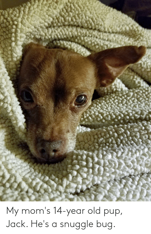 14 Year Old: My mom's 14-year old pup, Jack. He's a snuggle bug.