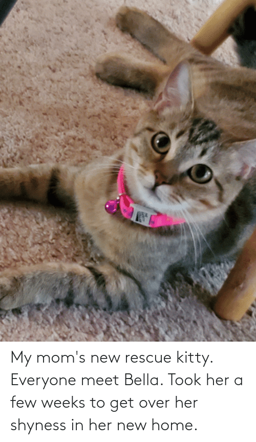 bella: My mom's new rescue kitty. Everyone meet Bella. Took her a few weeks to get over her shyness in her new home.