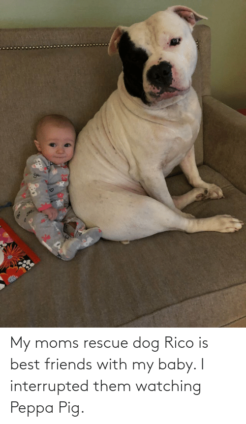 rico: My moms rescue dog Rico is best friends with my baby. I interrupted them watching Peppa Pig.