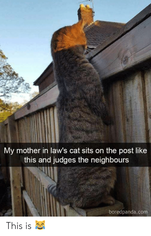neighbours: My mother in law's cat sits on the post like  this and judges the neighbours  boredpanda.com This is 😹