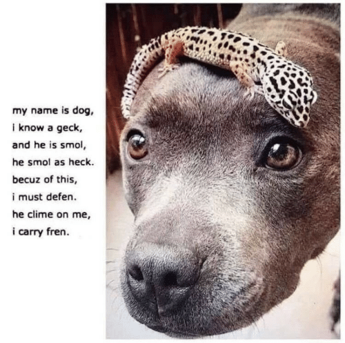 Dog, Name, and Geck: my name is dog,  i know a geck,  and he is smol,  he smol as heck.  becuz of this,  i must defen.  he clime on me,  i carry fren