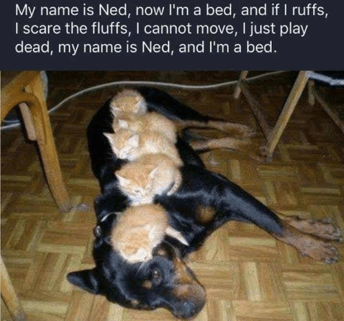 Scare, Play, and Name: My name is Ned, now I'm a bed, and if I ruffs,  I scare the fluffs, I cannot move, I just play  dead, my name is Ned, and I'm a bed