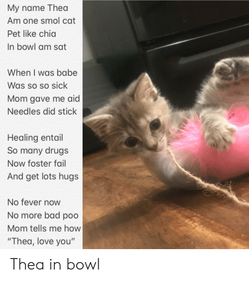 """Bad, Drugs, and Fail: My name Thea  Am one smol cat  Pet like chia  In bowl am sat  When I was babe  Was so so sick  Mom gave me aid  Needles did stick  Healing entail  So many drugs  Now foster fail  And get lots hugs  No fever noW  No more bad poo  Mom tells me how  """"Thea, love you"""" Thea in bowl"""