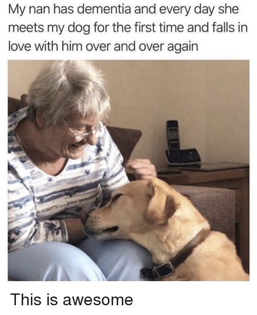 Love, Dementia, and Time: My nan has dementia and every day she  meets my dog for the first time and falls in  love with him over and over again This is awesome