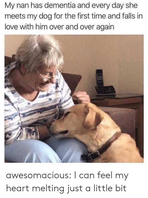 Dementia: My nan has dementia and every day she  meets my dog for the first time and falls in  love with him over and over again awesomacious:  I can feel my heart melting just a little bit