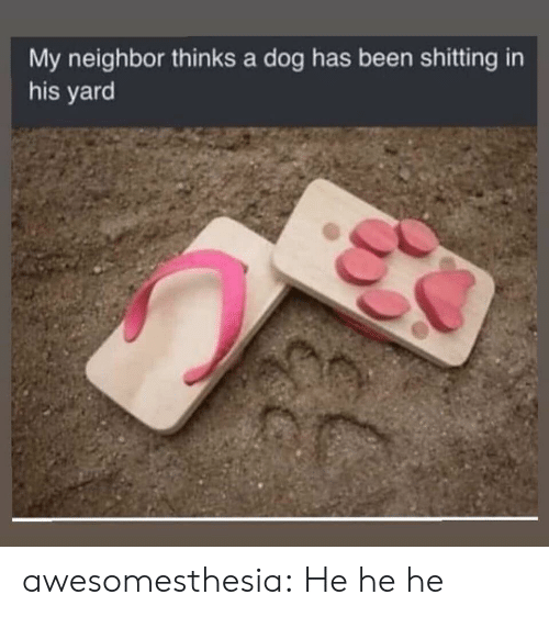 Tumblr, Blog, and Been: My neighbor thinks a dog has been shitting in  his yard awesomesthesia:  He he he