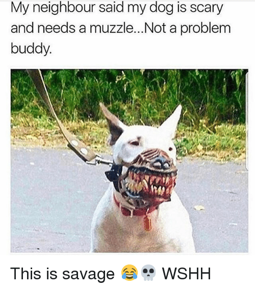 Not A Problem: My neighbour said my dog is scary  and needs a muzzle...Not a problem  buddy This is savage 😂💀 WSHH