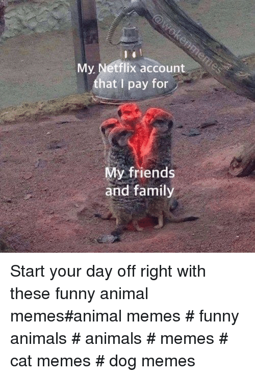 funny animal memes: My Netflix account  that I pay for  My friends  and family Start your day off right with these funny animal memes#animal memes # funny animals # animals # memes # cat memes # dog memes