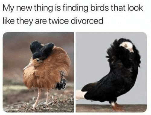 That Look: My new thing is finding birds that look  like they are twice divorced