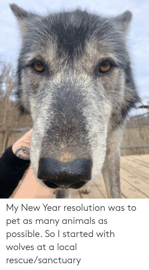 New Year Resolution: My New Year resolution was to pet as many animals as possible. So I started with wolves at a local rescue/sanctuary