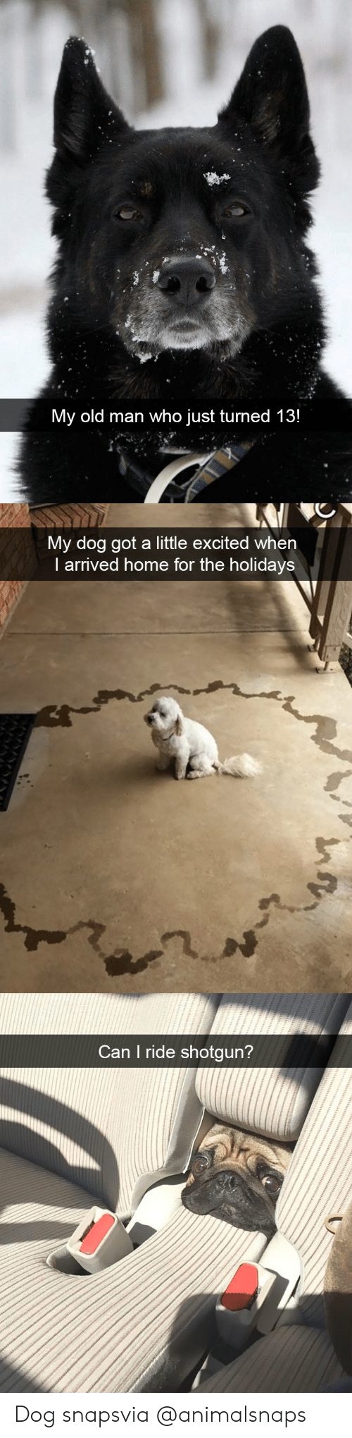 the holidays: My old man who just turned 13!   My dog got a little excited when  I arrived home for the holidays   Can I ride shotgun? Dog snapsvia @animalsnaps