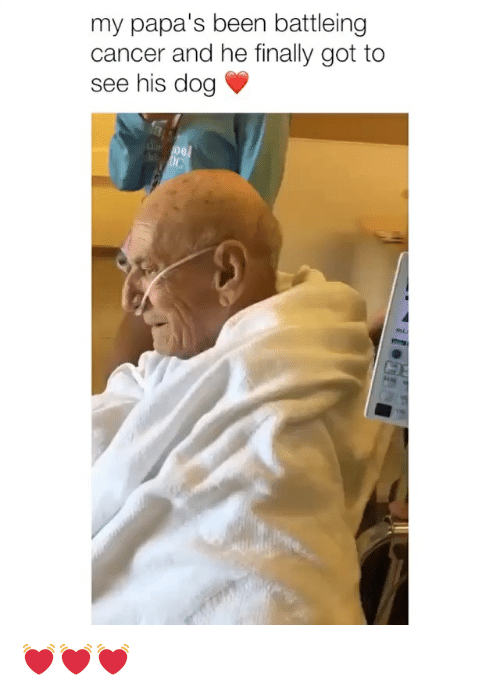 Cancer, Girl Memes, and Been: my papa's been battleing  cancer and he finally got to  see his dog 💓💓💓