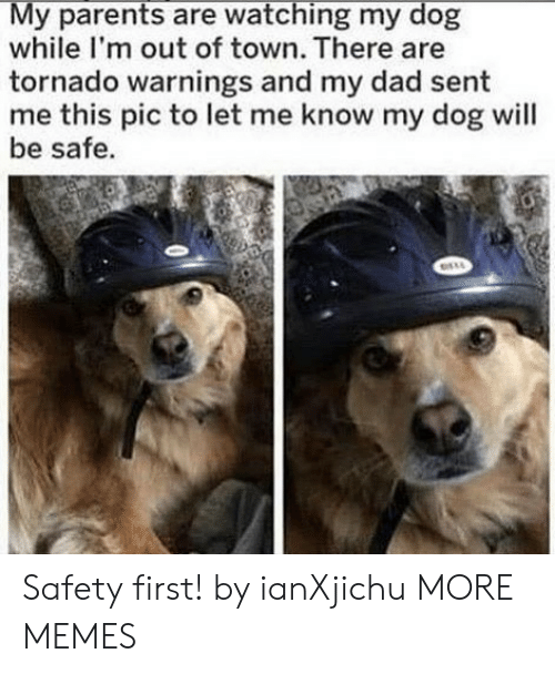 out of town: My parents are watching my dog  while I'm out of town. There are  tornado warnings and my dad sent  me this pic to let me know my dog will  be safe. Safety first! by ianXjichu MORE MEMES
