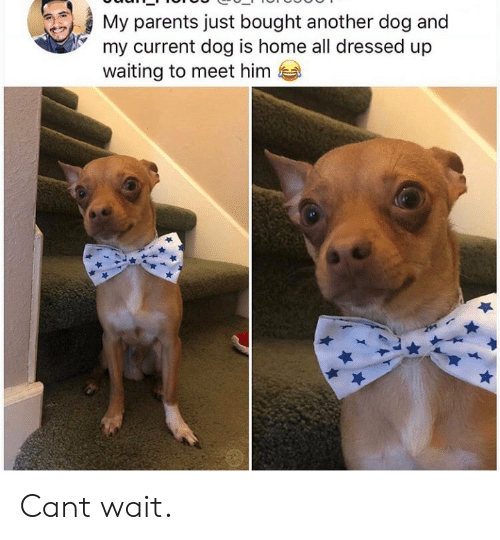 Parents, Home, and Waiting...: My parents just bought another dog and  my current dog is home all dressed up  waiting to meet him Cant wait.