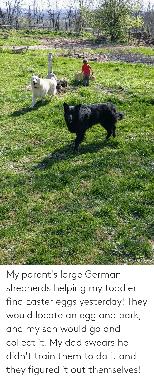 toddler: My parent's large German shepherds helping my toddler find Easter eggs yesterday! They would locate an egg and bark, and my son would go and collect it. My dad swears he didn't train them to do it and they figured it out themselves!