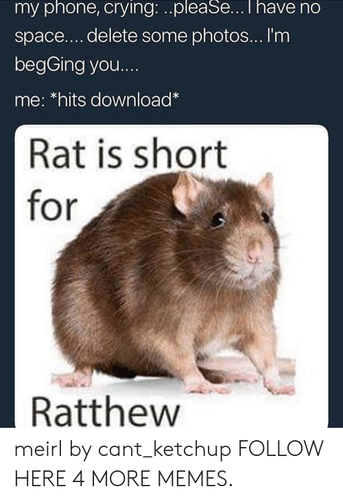 Im Begging You: my phone, crying: ..pleaSe...T have no  space.... delete some photos... I'm  begGing you...  me: *hits download*  Rat is short  for  Ratthew meirl by cant_ketchup FOLLOW HERE 4 MORE MEMES.