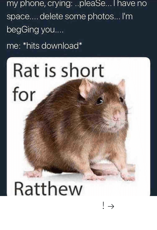 Im Begging You: my phone, crying: ..pleaSeI have no  space....delete some photos... I'm  begGing you  me: *hits download  Rat is short  for  Ratthew 𝘍𝘰𝘭𝘭𝘰𝘸 𝘮𝘺 𝘗𝘪𝘯𝘵𝘦𝘳𝘦𝘴𝘵! → 𝘤𝘩𝘦𝘳𝘳𝘺𝘩𝘢𝘪𝘳𝘦𝘥