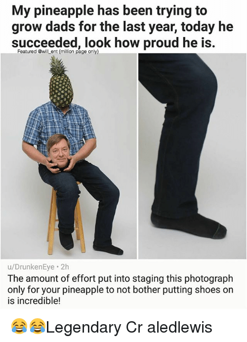 not bothered: My pineapple has been trying to  grow dads for the last year, today he  succeeded, look how proud he is  Featured @will ent (million page only)  u/DrunkenEye. 2h  The amount of effort put into staging this photograph  only for your pineapple to not bother putting shoes on  is incredible! 😂😂Legendary Cr aledlewis