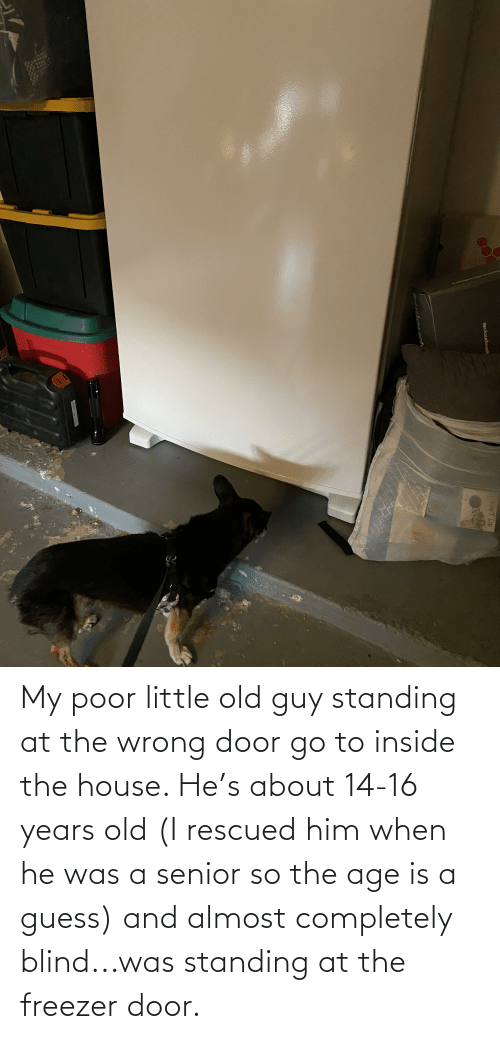 16 years old: My poor little old guy standing at the wrong door go to inside the house. He's about 14-16 years old (I rescued him when he was a senior so the age is a guess) and almost completely blind...was standing at the freezer door.