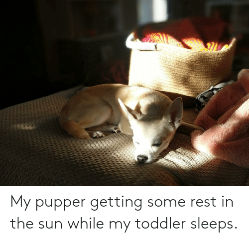 toddler: My pupper getting some rest in the sun while my toddler sleeps.