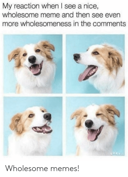 Meme, Memes, and Wholesome: My reaction when I see a nice,  wholesome meme and then see even  more wholesomeness in the comments Wholesome memes!