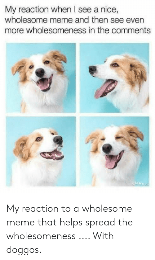 Meme, Wholesome, and Helps: My reaction when I see a nice,  wholesome meme and then see even  more wholesomeness in the comments  SURE My reaction to a wholesome meme that helps spread the wholesomeness .... With doggos.
