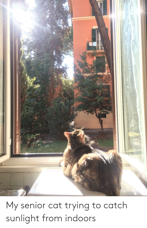Indoors: My senior cat trying to catch sunlight from indoors