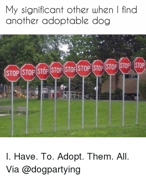 significant other: My significant other when | find  another adoptable dog  STOP STOP STOP STOP STOF STOP STOP STOP STOP STOP  dogpar  tying I. Have. To. Adopt. Them. All. Via @dogpartying