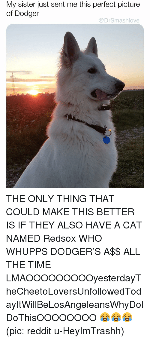Dodger: My sister just sent me this perfect picture  of Dodger  @DrSmashlove THE ONLY THING THAT COULD MAKE THIS BETTER IS IF THEY ALSO HAVE A CAT NAMED Redsox WHO WHUPPS DODGER'S A$$ ALL THE TIME LMAOOOOOOOOOyesterdayTheCheetoLoversUnfollowedTodayItWillBeLosAngeleansWhyDoIDoThisOOOOOOOO 😂😂😂 (pic: reddit u-HeyImTrashh)