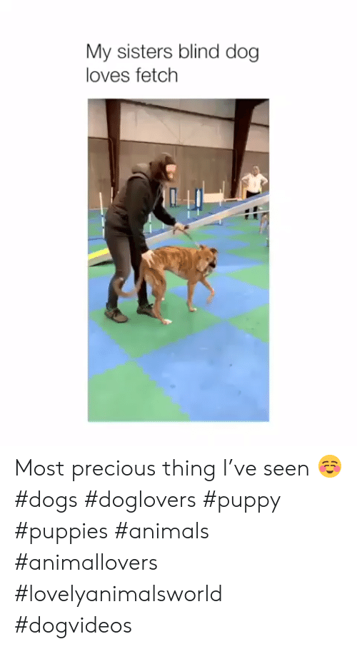 fetch: My sisters blind dog  loves fetch Most precious thing I've seen ☺️ #dogs #doglovers #puppy #puppies #animals #animallovers #lovelyanimalsworld #dogvideos