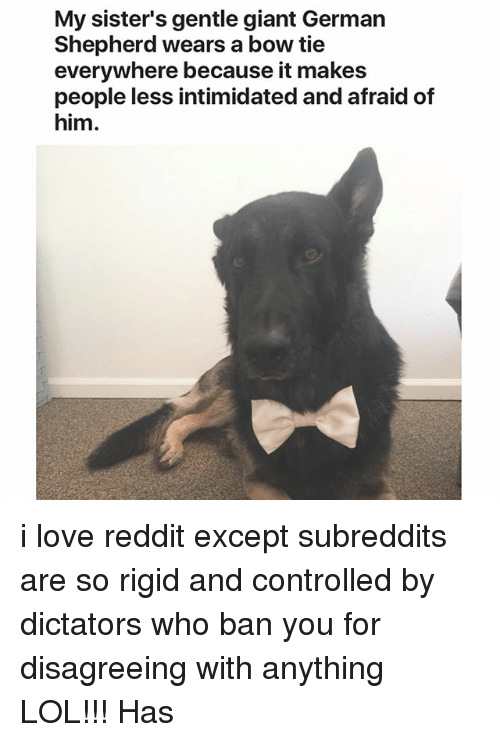subreddits: My sister's gentle giant German  Shepherd wears a bow tie  everywhere because it makes  people less intimidated and afraid of  him. i love reddit except subreddits are so rigid and controlled by dictators who ban you for disagreeing with anything LOL!!! Has