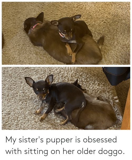 sisters: My sister's pupper is obsessed with sitting on her older doggo.