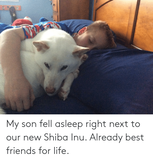 Shiba Inu: My son fell asleep right next to our new Shiba Inu. Already best friends for life.
