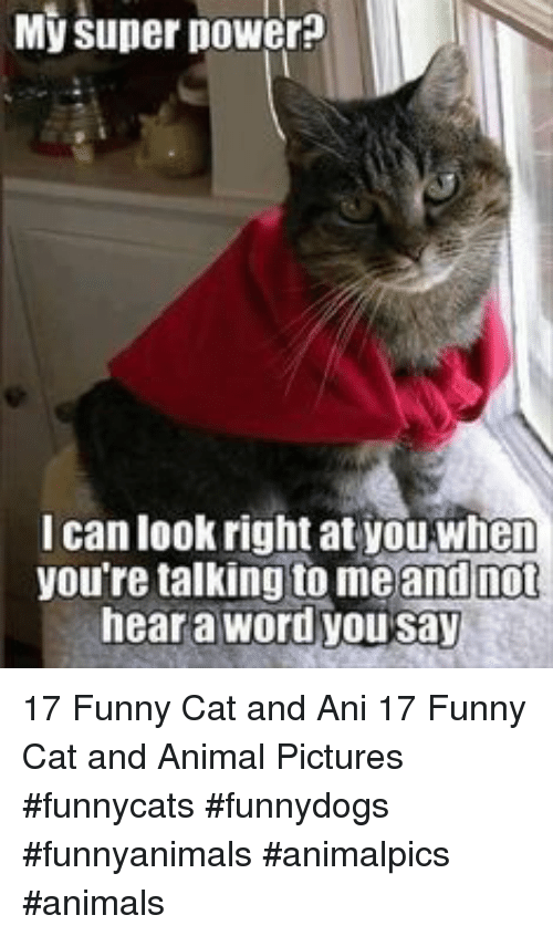 Animals, Funny, and Animal: My super power?  I can look right at youwhen  you're talking to meand not  hear a word you say 17 Funny Cat and Ani 17 Funny Cat and Animal Pictures #funnycats #funnydogs #funnyanimals #animalpics #animals