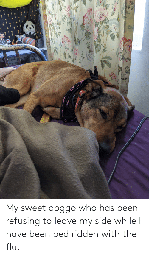 I Have: My sweet doggo who has been refusing to leave my side while I have been bed ridden with the flu.