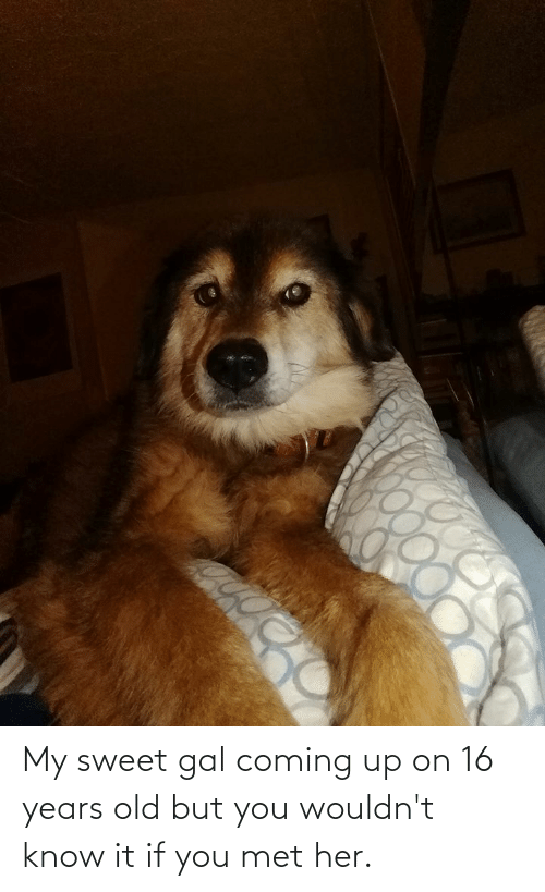 Old, Her, and You: My sweet gal coming up on 16 years old but you wouldn't know it if you met her.