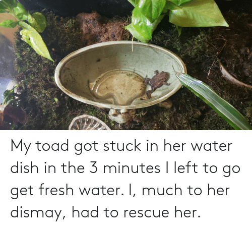 toad: My toad got stuck in her water dish in the 3 minutes I left to go get fresh water. I, much to her dismay, had to rescue her.