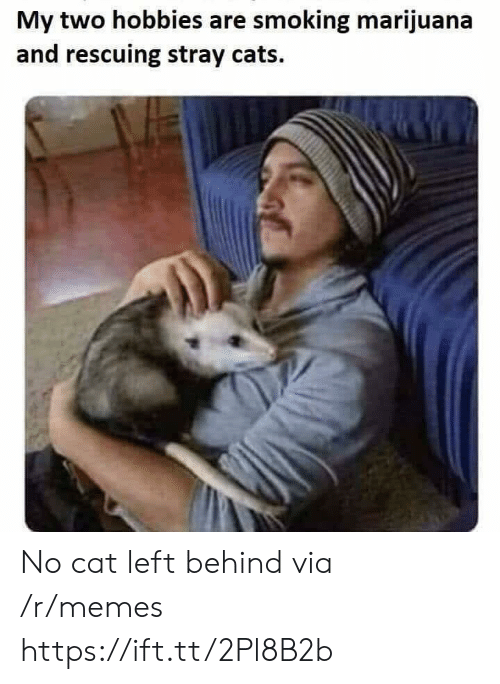 stray cats: My two hobbies are smoking marijuana  and rescuing stray cats. No cat left behind via /r/memes https://ift.tt/2Pl8B2b