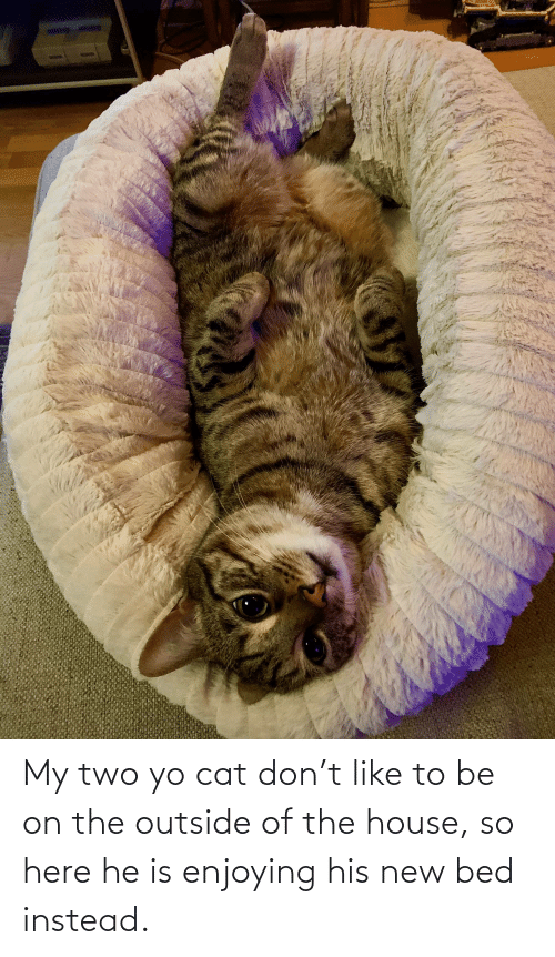 Outside Of: My two yo cat don't like to be on the outside of the house, so here he is enjoying his new bed instead.