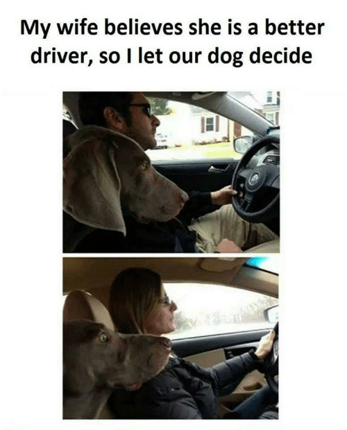 Wife, Dog, and Driver: My wife believes she is a better  driver, so I let our dog decide