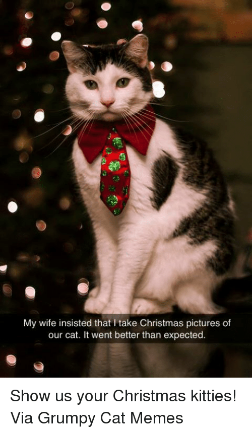Kitties, Memes, and Grumpy Cat: My wife insisted that l take Christmas pictures of  our cat. It went better than expected. Show us your Christmas kitties! Via Grumpy Cat Memes