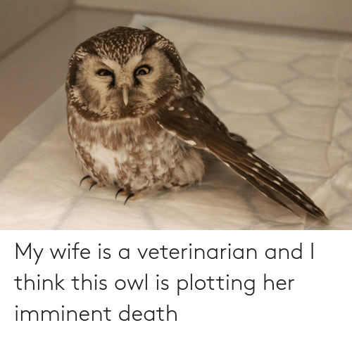 owl: My wife is a veterinarian and I think this owl is plotting her imminent death